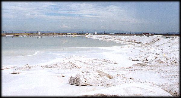 La sal marina que se considera de buena calidad contiene muchos minerales esenciales para el cuerpo, el mejor tipo de sal marina será apenas húmeda por conservar aún parte de la humedad del mar.