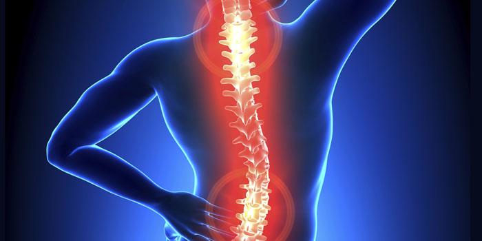 """Resultado de imagen para columna vertebral"""""""
